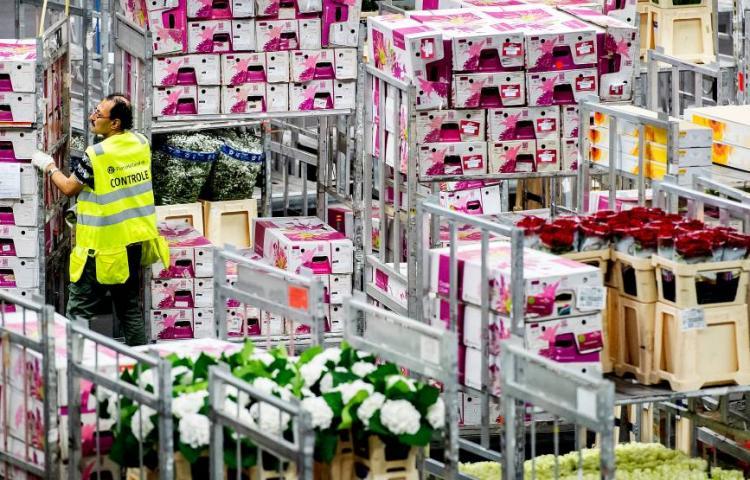 Export Flowers
